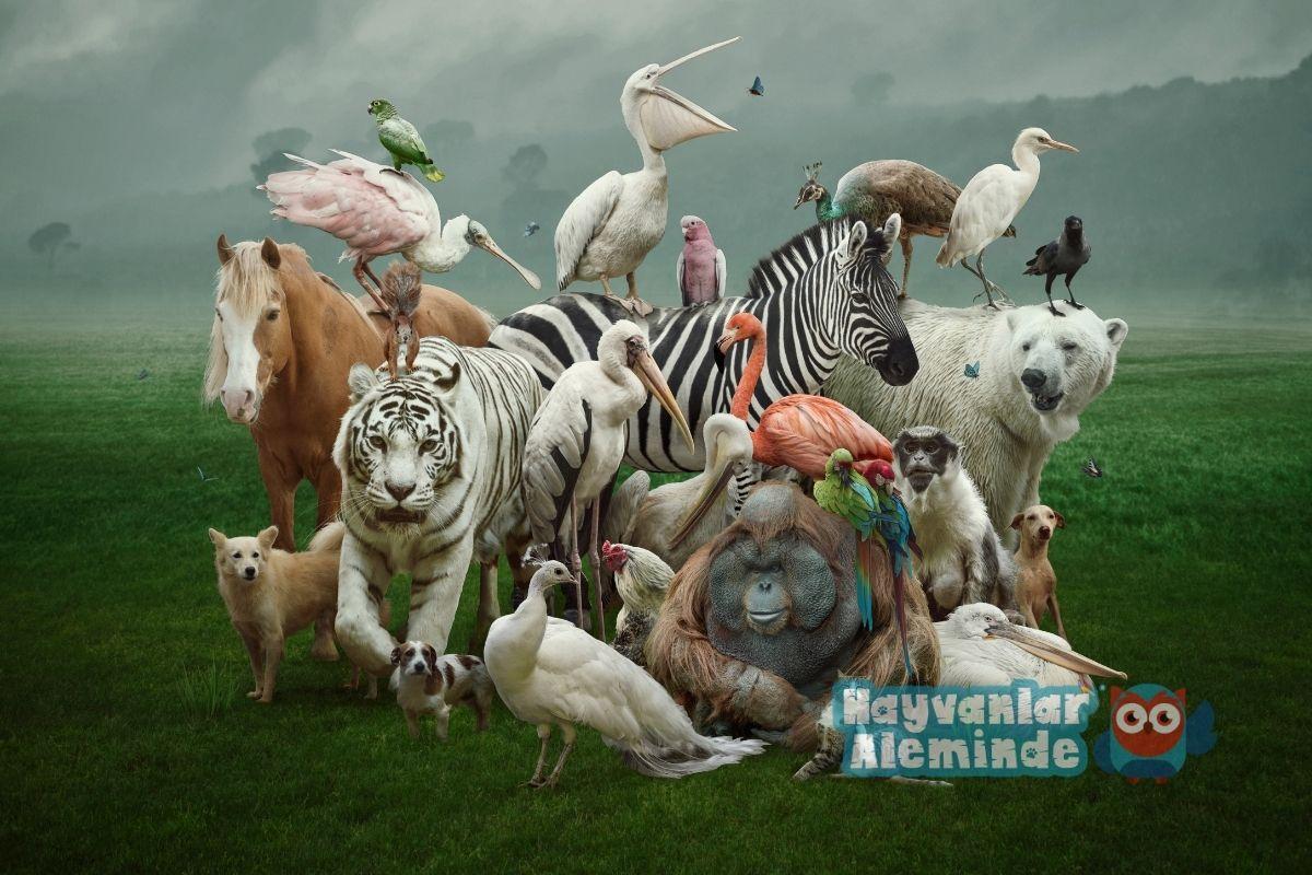 dünaydaki en güçlü 10 hayvan