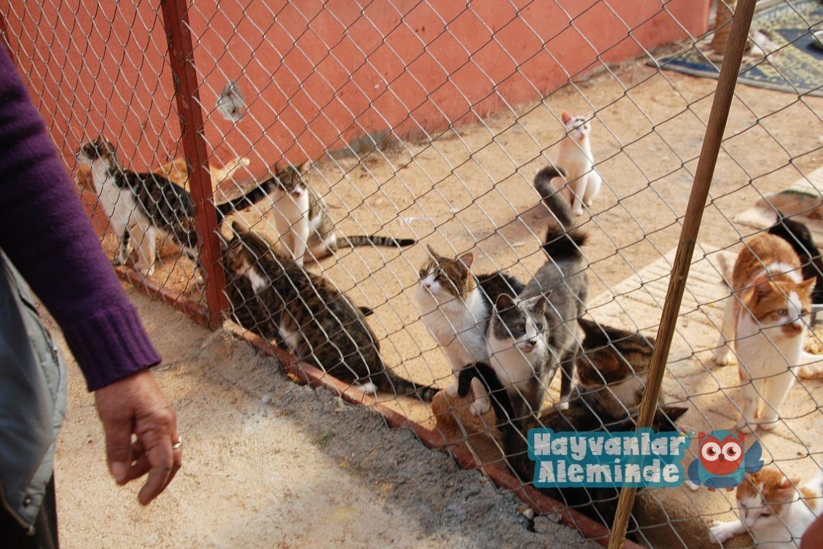 istanbul hayvan barınakları