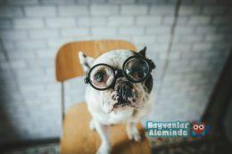 Köpek Yaşı Hesaplaması Nasıl Yapılır?