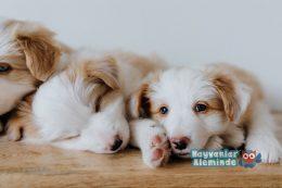 Yavru Köpek Bakımı Üzerine Bilinmesi Gerekenler