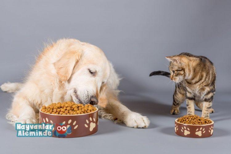 kediye köpek maması verilir mi