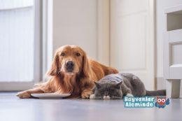 Köpekler Kedi Maması Yer Mi?