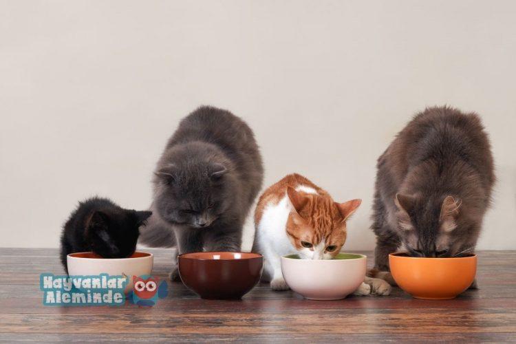 Kedi Maması Yaparken Dikkat Edilmesi Gerekenler