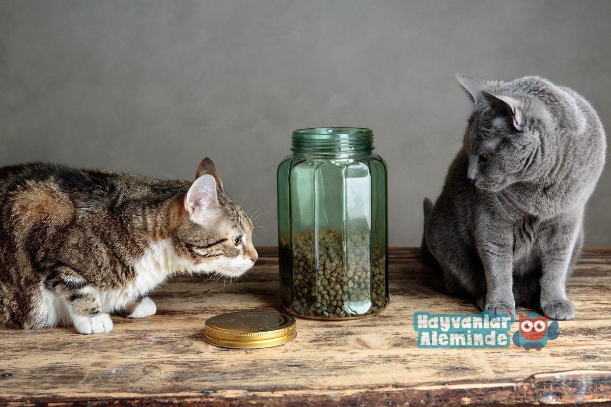 Kediye Evde Mama Hazırlama