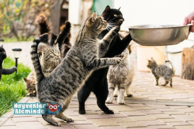 Kolay Kedi Maması Tarifi