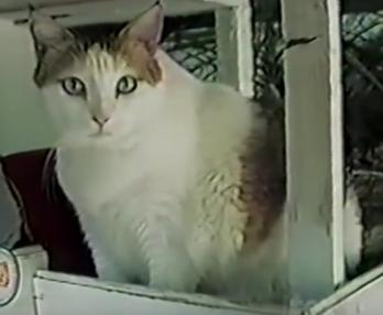En uzun yaşayan kedi