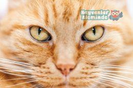 Kedilerin Ömrü Kaç Yıl Olur? Kediler Kaç Yıl Yaşar?