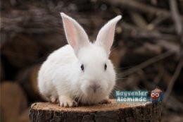 Tavşan Hastalıkları ve Belirtileri Nelerdir? İnsana Bulaşır mı?