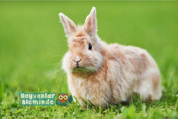 tavşan hastalıkları belirtileri