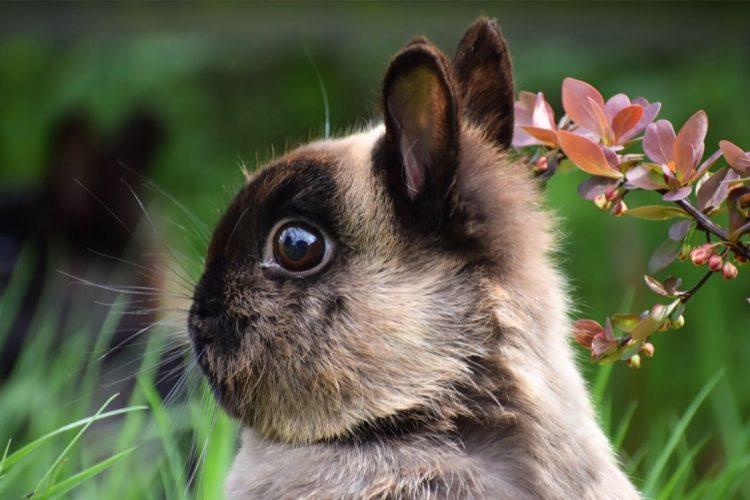 tavşan hastalıkları ve belirtileri