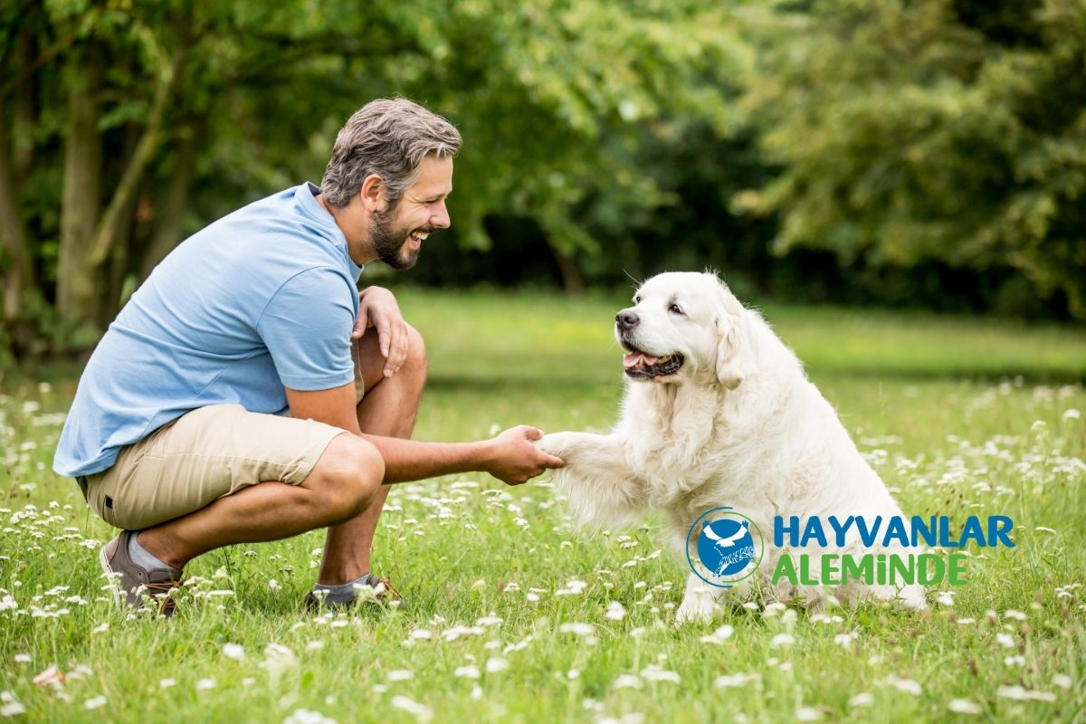 Kolay Eğitilen ve Hızlı Öğrenen Köpek Cinsleri
