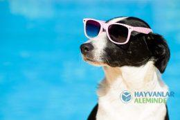 Sıcak Havalarda Köpek Bakımı Üzerine Bilmeniz Gerekenler