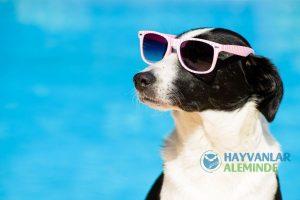 Sıcak Havalarda Köpek Bakımı