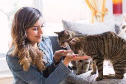 Kaliteli Kedi Maması Seçerken Dikkat Edilmesi Gerekenler