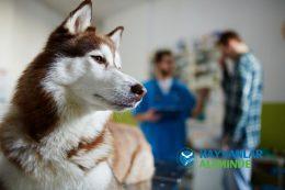 Köpeklerde Kanlı İshal Nedenleri, Belirtileri ve Tedavisi